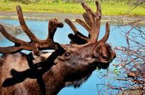 Alaska: Park Narodowy Kenai Fjords