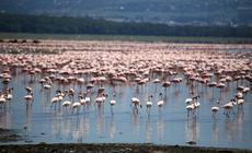 Kenia, Nukuru